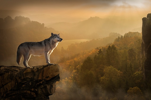 Image result for lone wolf